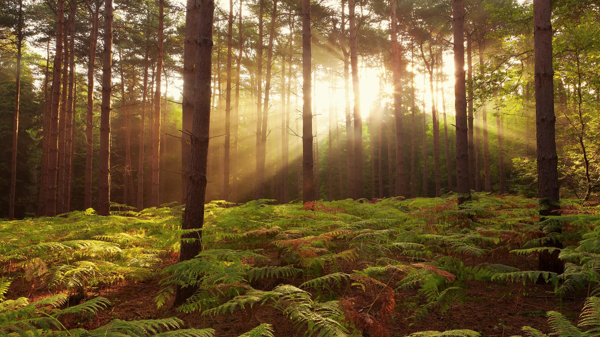 Collection of Forest Hd Background on HDWallpapers