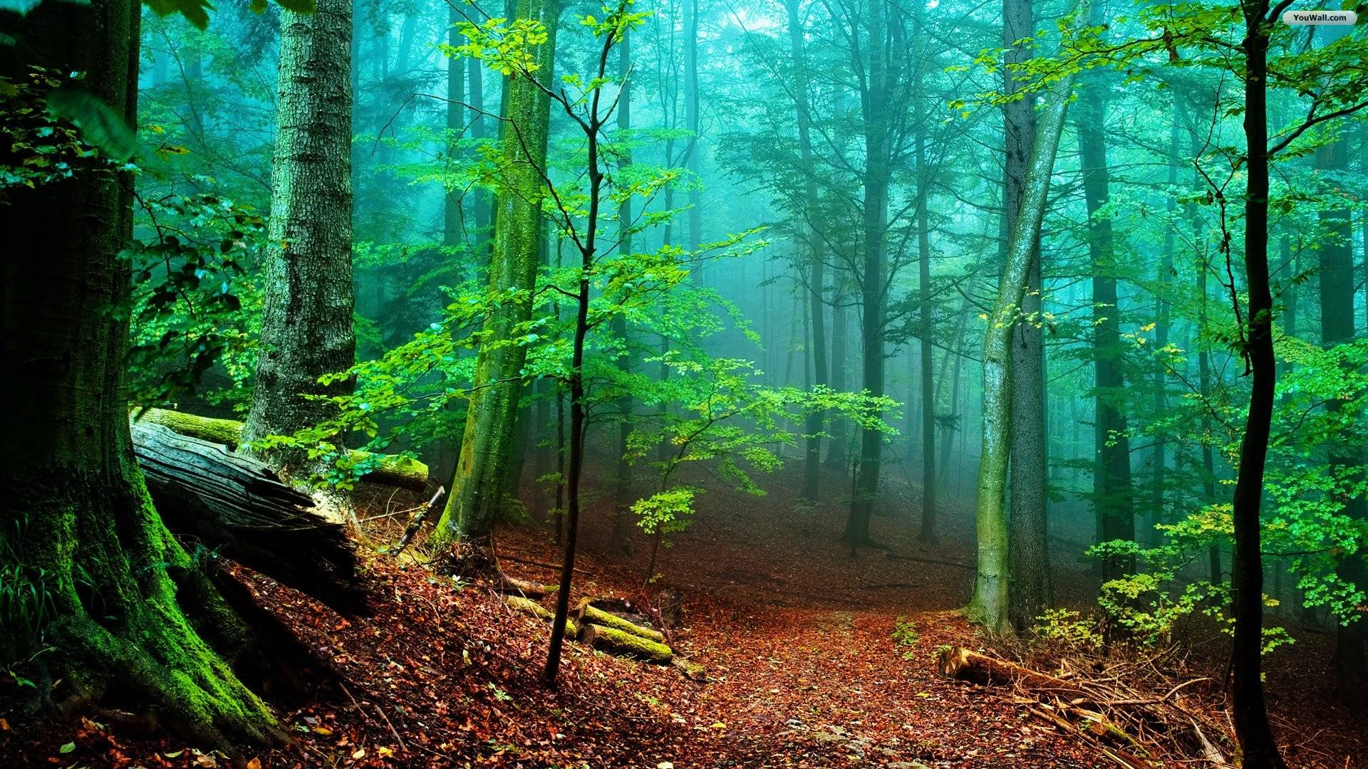 Forest HD Wallpapers - Wallpaper Cave