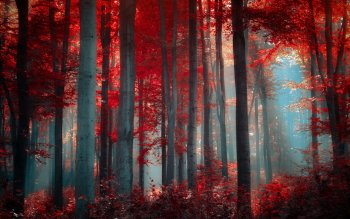 1668 Forest HD Wallpapers | Backgrounds - Wallpaper Abyss
