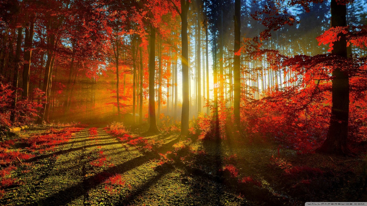 Red Forest HD desktop wallpaper : High Definition : Fullscreen