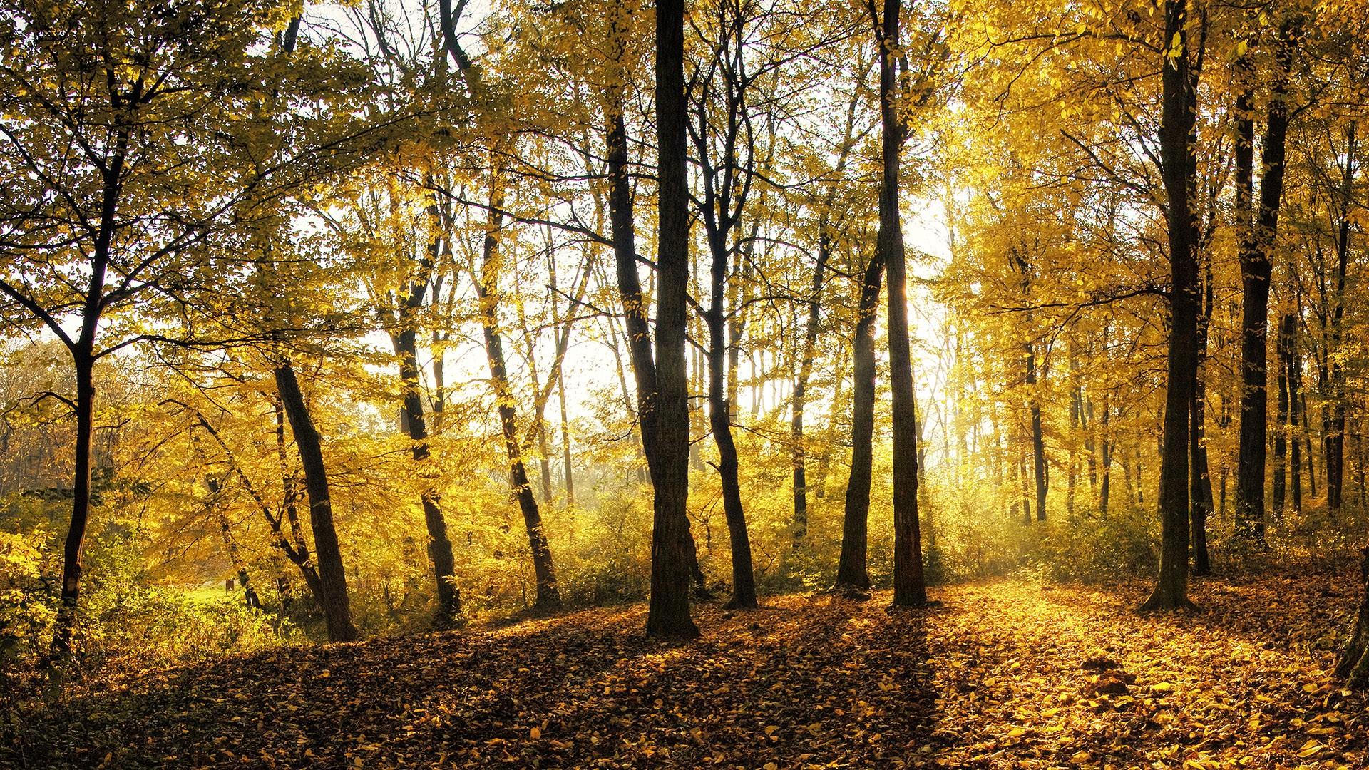 Popular Wallpaper High Resolution Forest - forest-landscape-wallpaper-22  Pic_803667.jpg