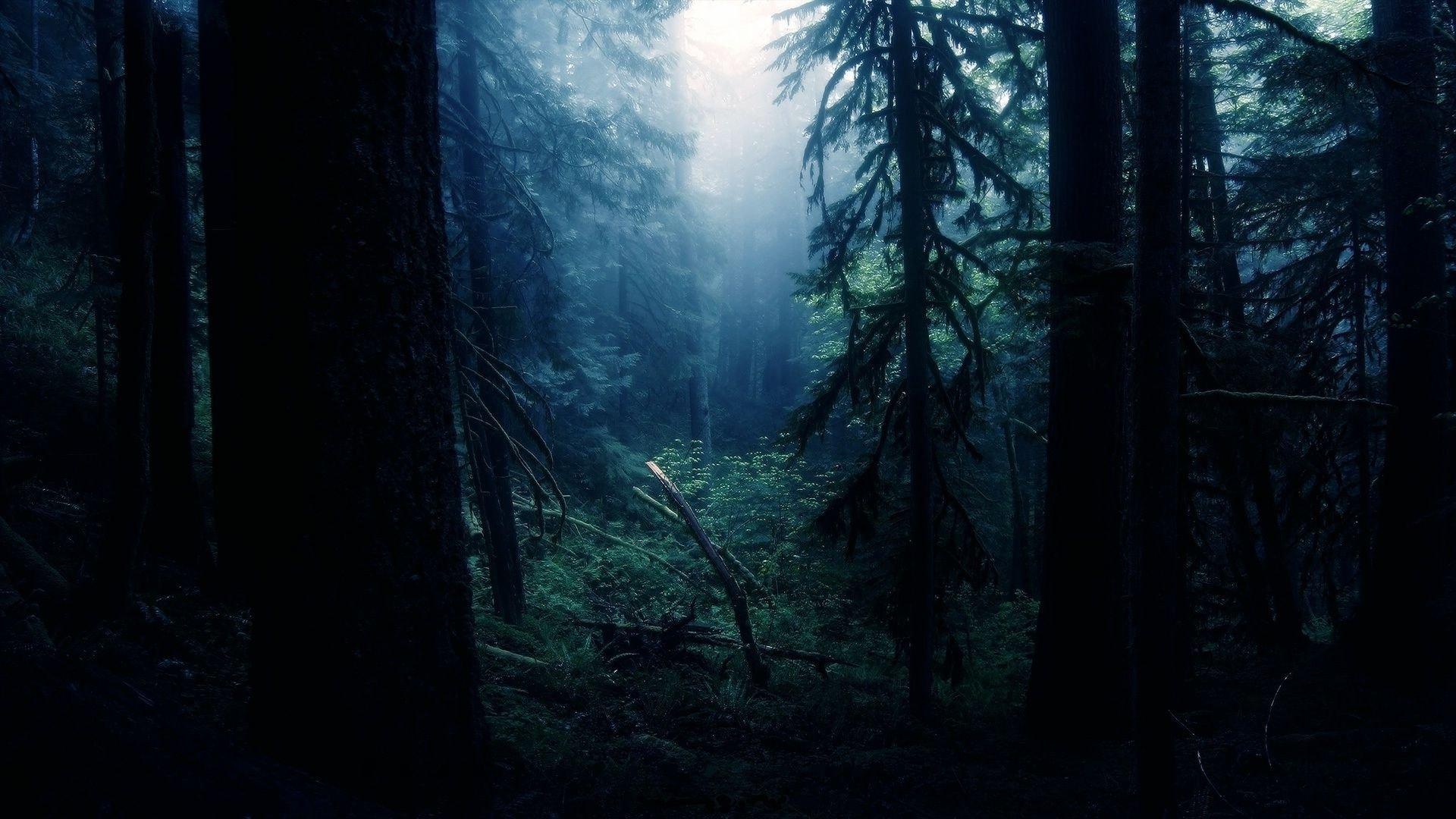 Forest Night Wallpaper Sf Wallpaper