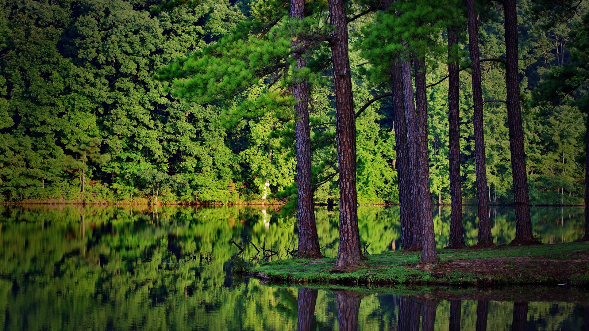 GYL: 37+ Beautiful Forest HD Wallpapers