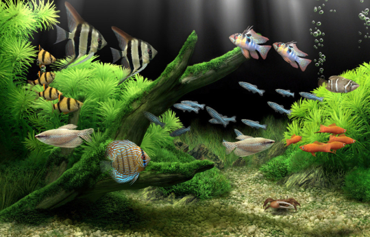 Dream Aquarium Screensaver - Free download and software reviews