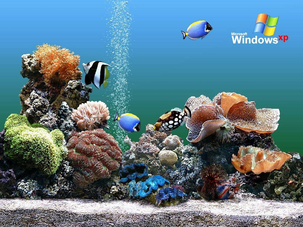 Aquarium Backgrounds Pictures - Wallpaper Cave