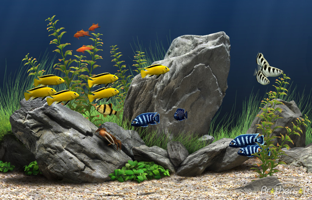 17+ ideas about Aquarium Screensaver on Pinterest | Fish