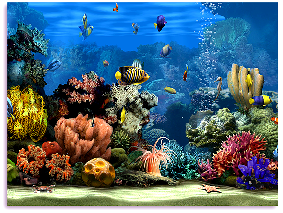 10 Best ideas about Aquarium Screensaver on Pinterest | Fish