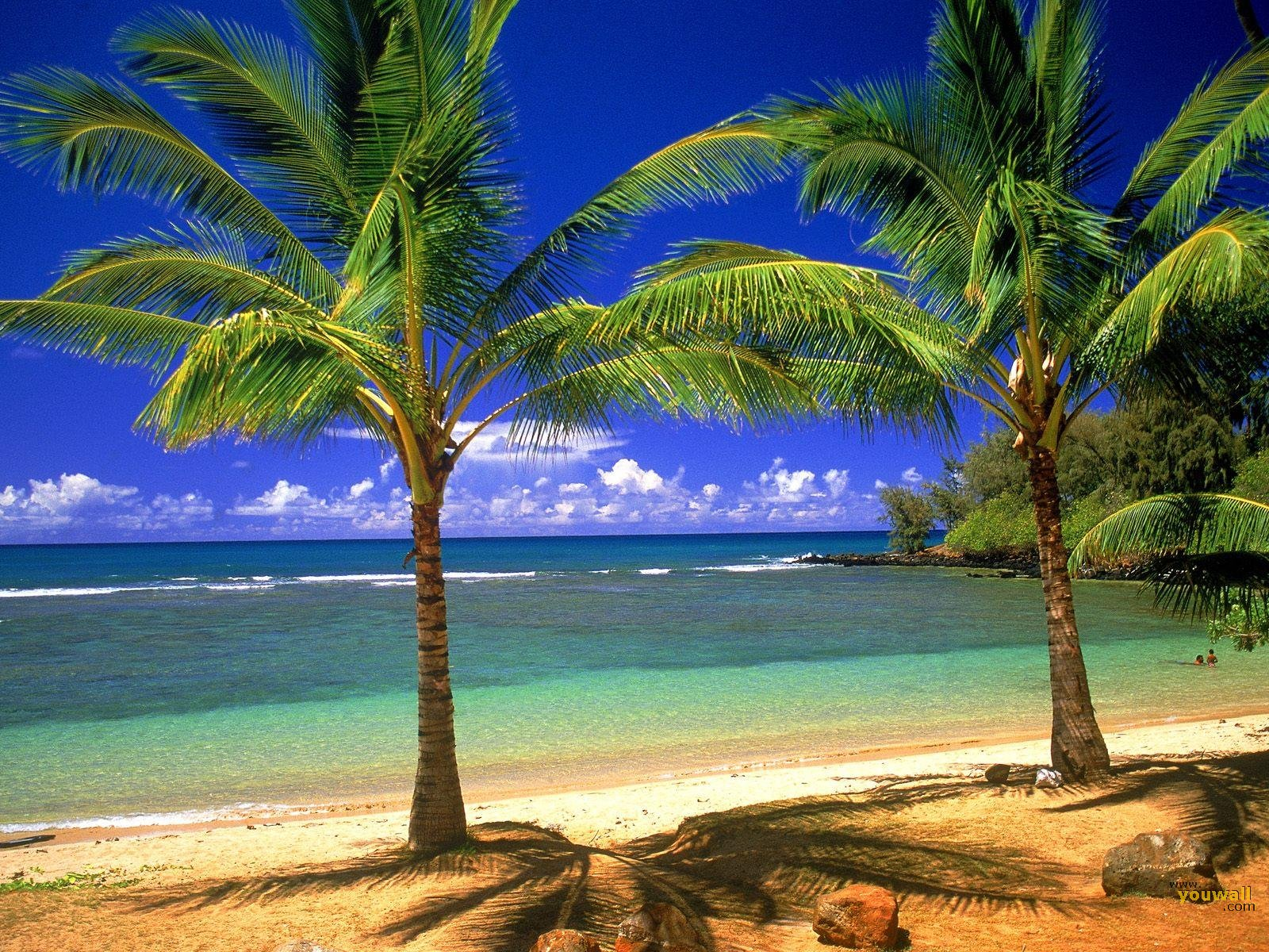 Tropical Beach Desktop Wallpaper Sf Pictures Wallpapers Group 89 Free
