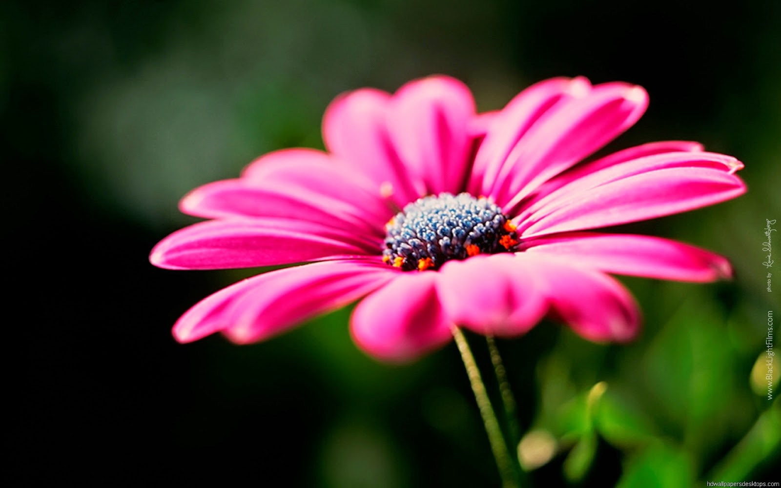 Free Best Wallpaper Images Flowers Background Sf Wallpaper