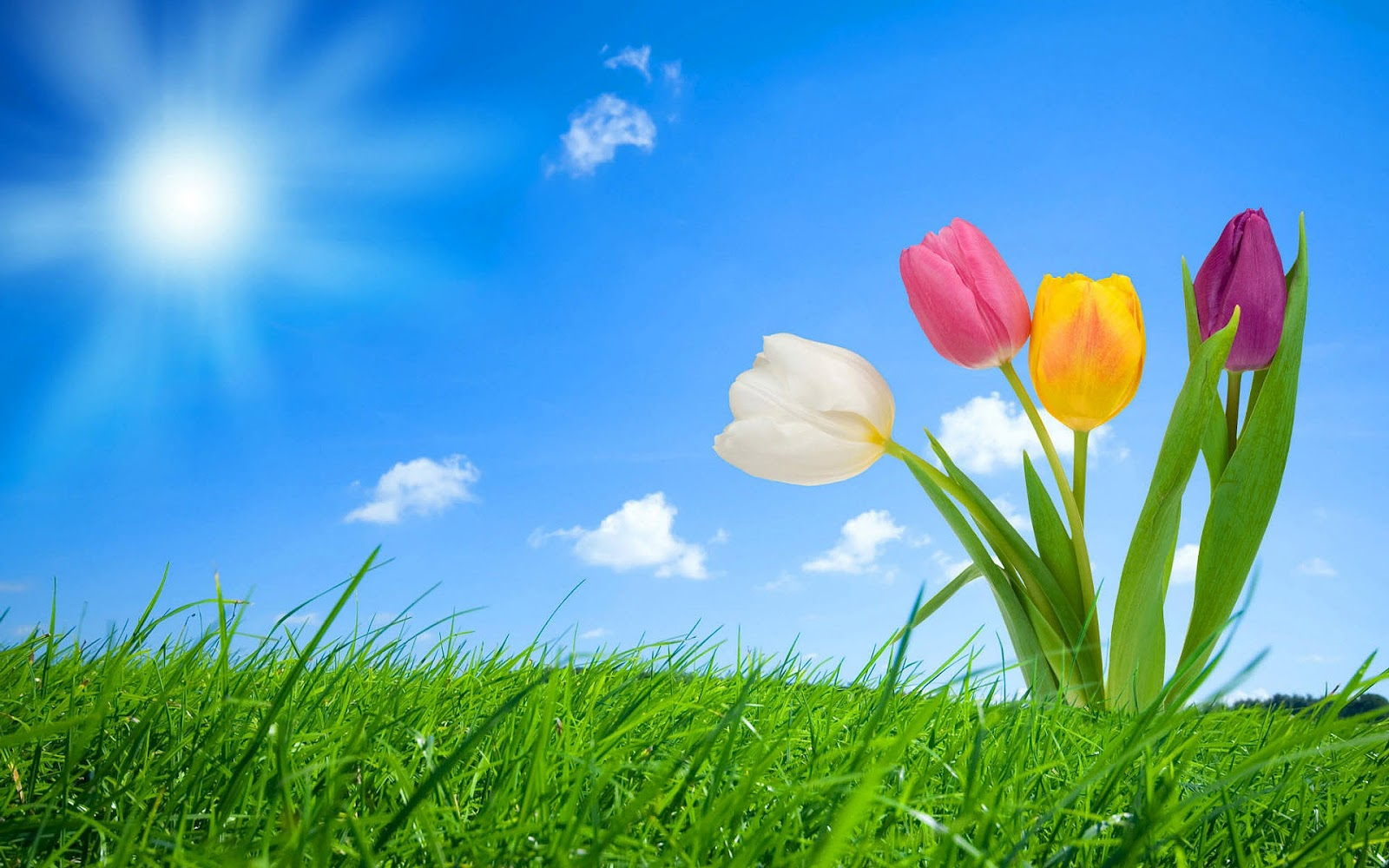 spring pictures for desktop | Best-top-desktop-spring-wallpapers