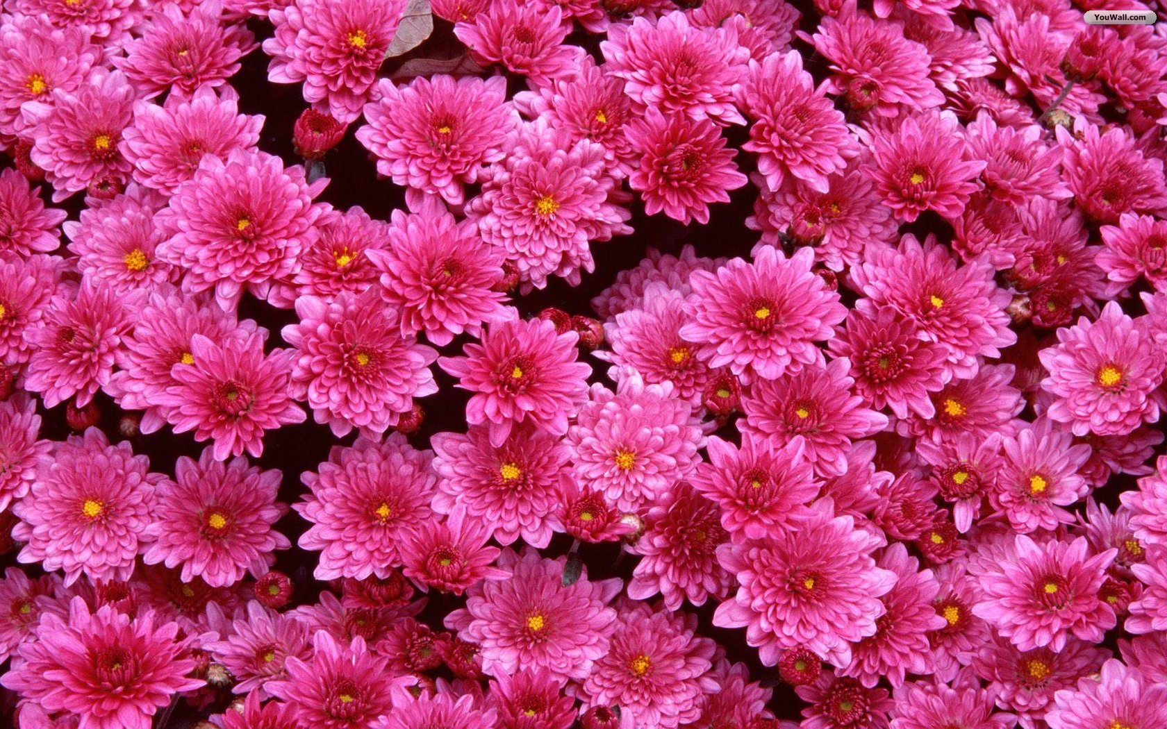 Free Flower Wallpaper Backgrounds