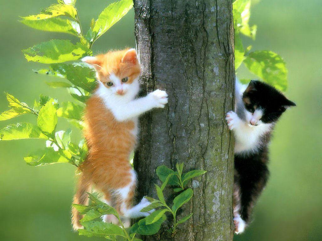Most Inspiring Cute Dog N Cat Wallpapers - free-cat-screensavers-and-wallpaper-19  Snapshot_934072 .jpg