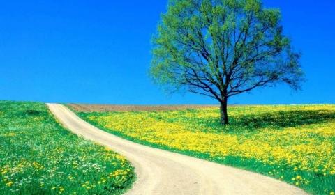 Free Download Of Beautiful Wallpaper Sf Wallpaper