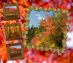 Free Fall Forest Wallpaper - Scenic Autumn Background