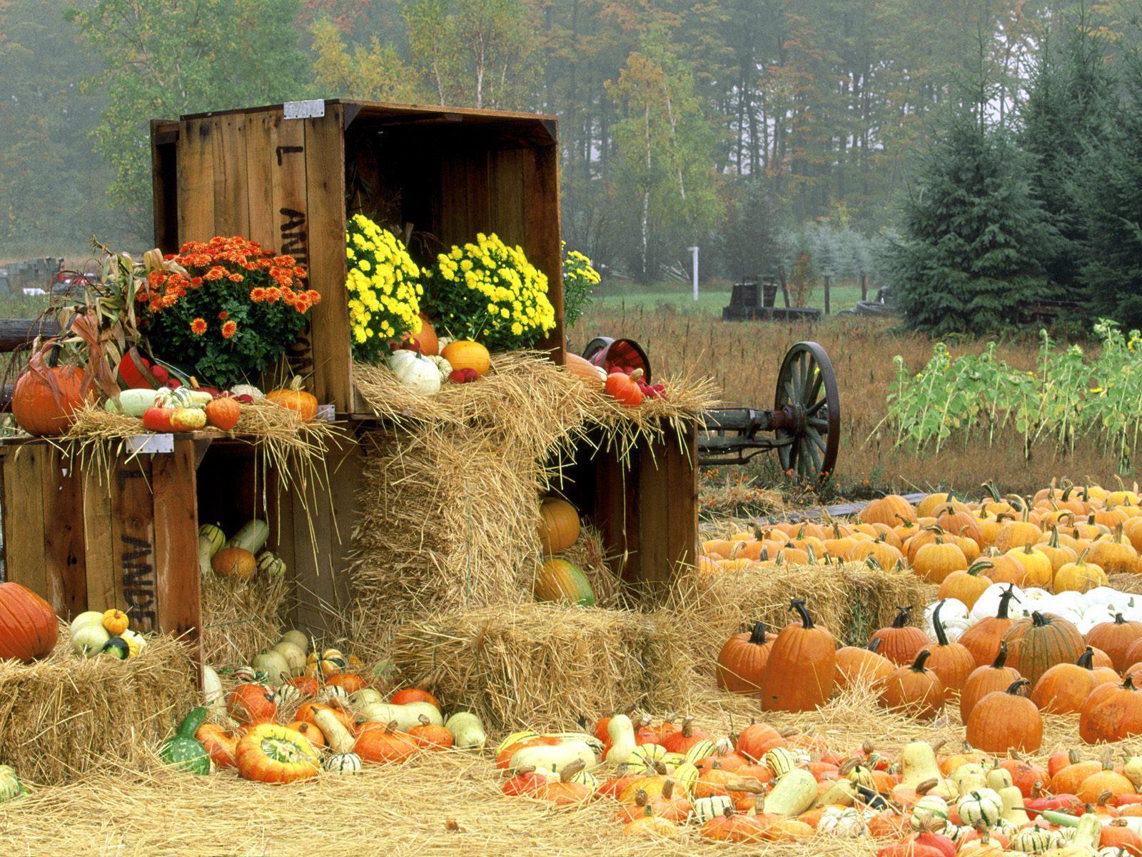 1000+ images about Autumn on Pinterest   Nature, Rain and Autumn