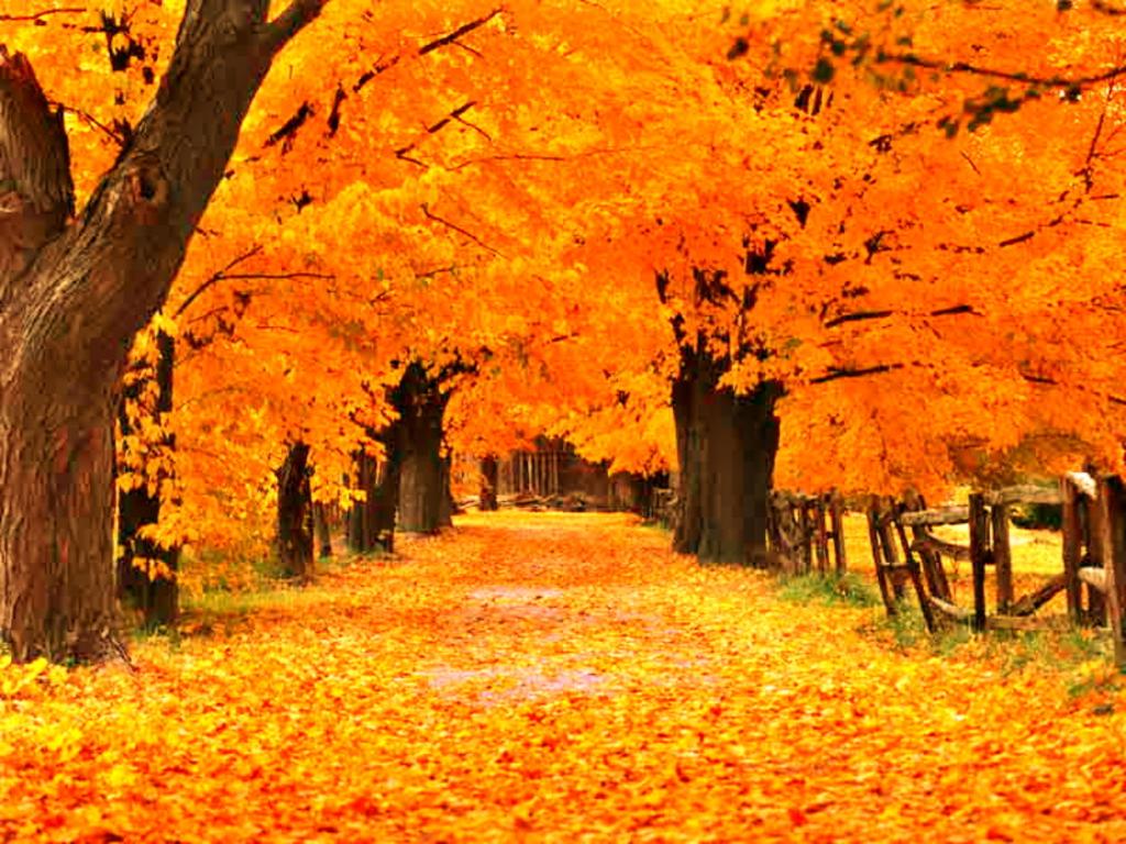 Free Autumn Screensavers Wallpaper - WallpaperSafari