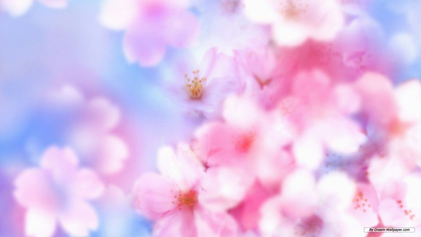 Collection Of Free Flower Wallpaper Backgrounds On HDWallpapers