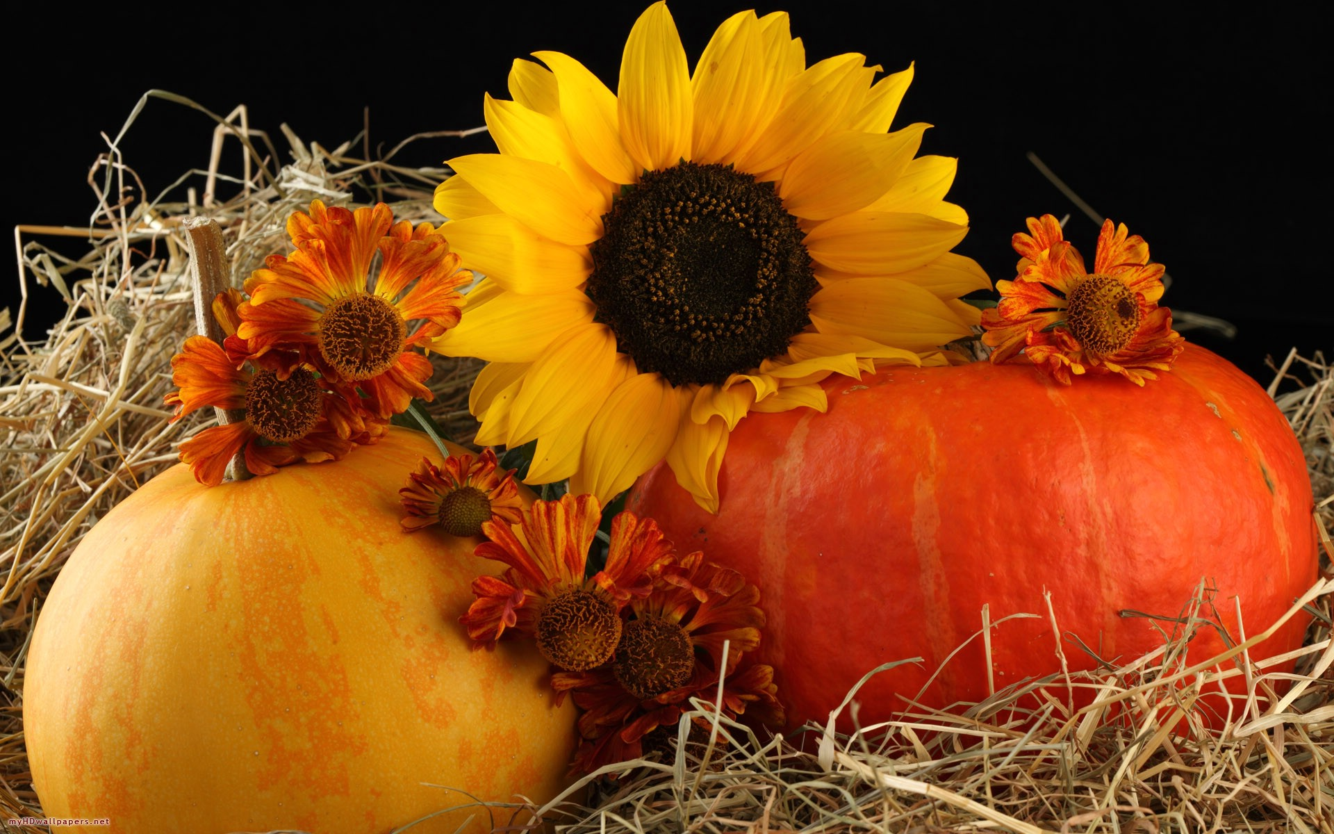 Free Pumpkin Wallpaper Backgrounds - WallpaperSafari