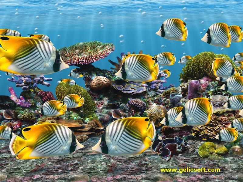 Tropical Fish Ipad Wallpapers Pic