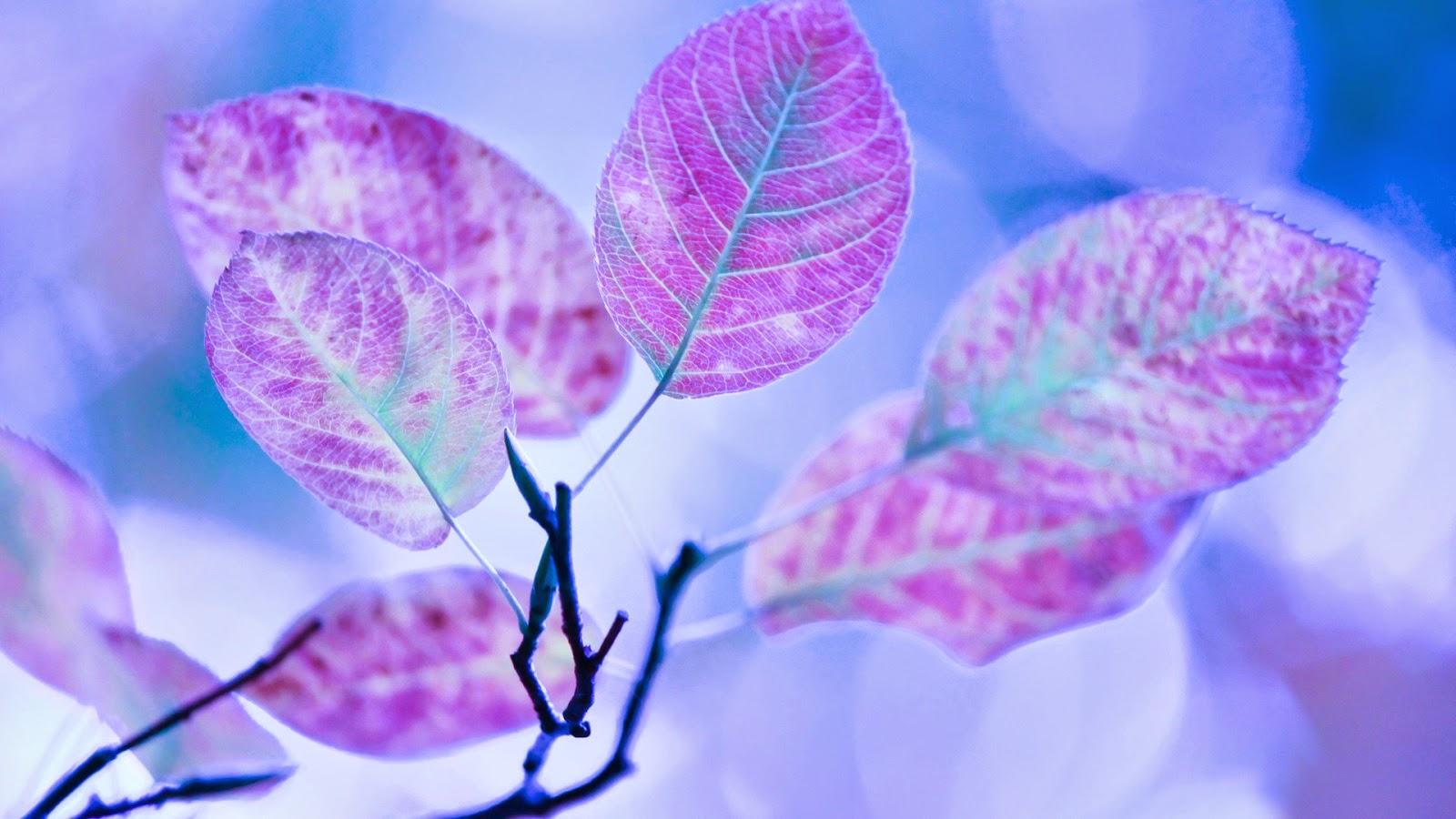 Best Wallpaper Mobile Purple - free-wallpapers-site-19  Photograph_23082.jpg