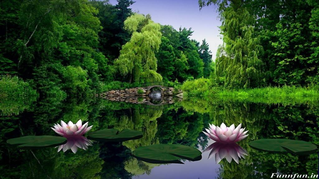 Nature Wallpapers Full Hd Sf Wallpaper