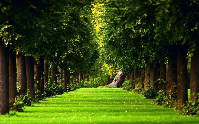 Green Nature Wallpaper Sf Wallpaper