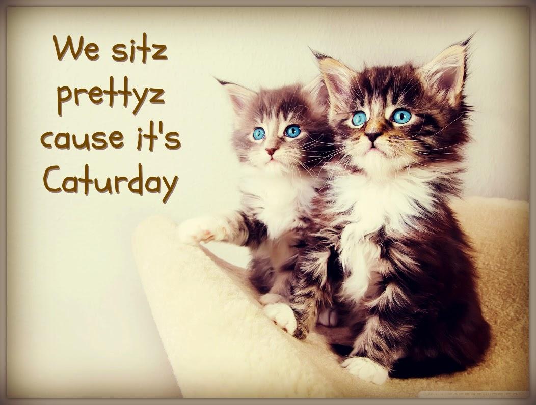 Caturday 2014 Cute Cat Gifs Funny Kitten Pics