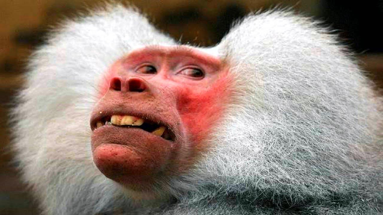 10 Funniest Monkey Videos - YouTube