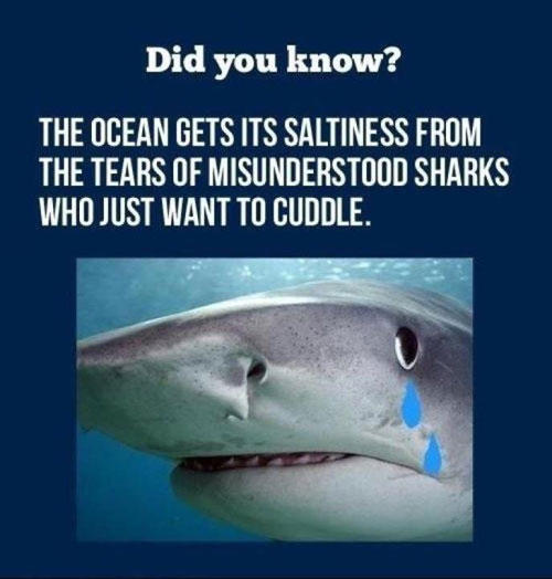 24 Funny Shark Week Pictures   SMOSH
