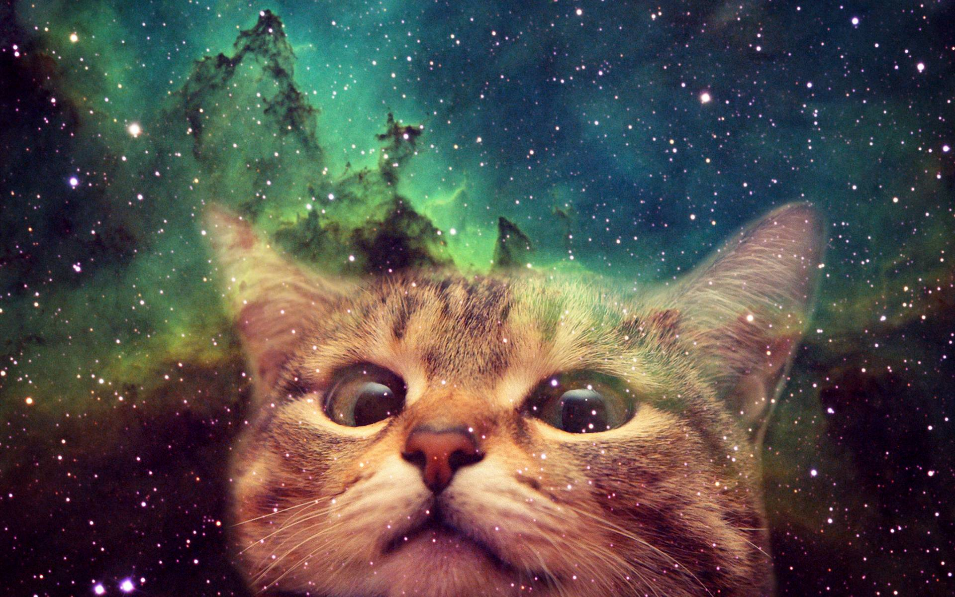 Space Cat Wallpaper Sf Wallpaper