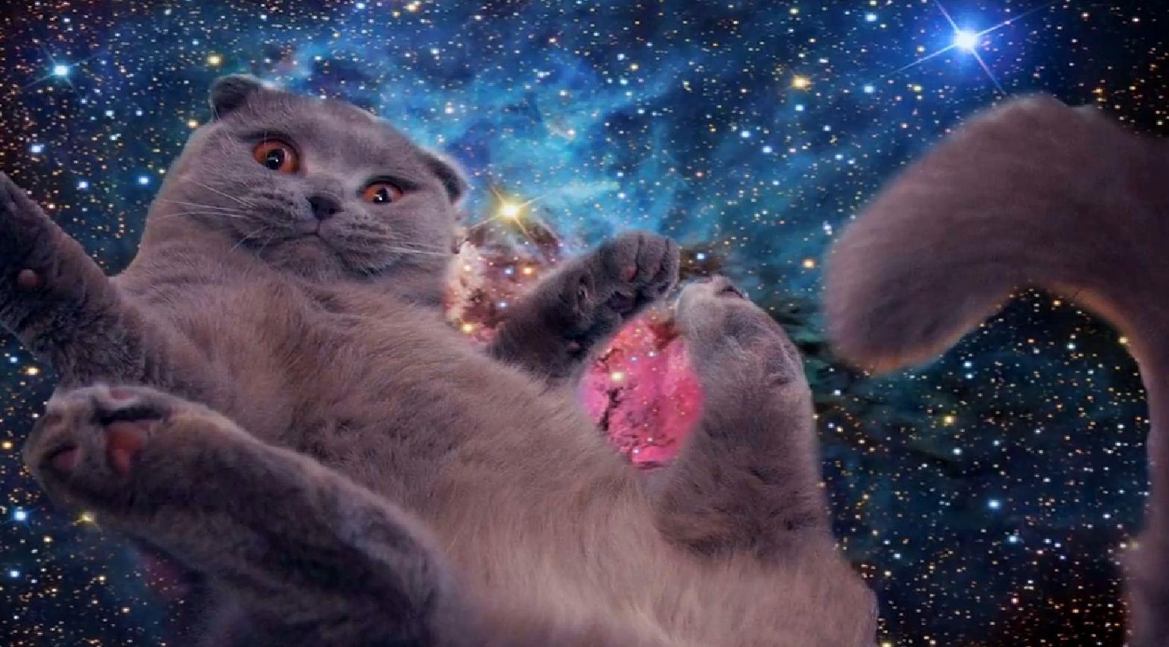 Galaxy Cat Wallpaper Group 50