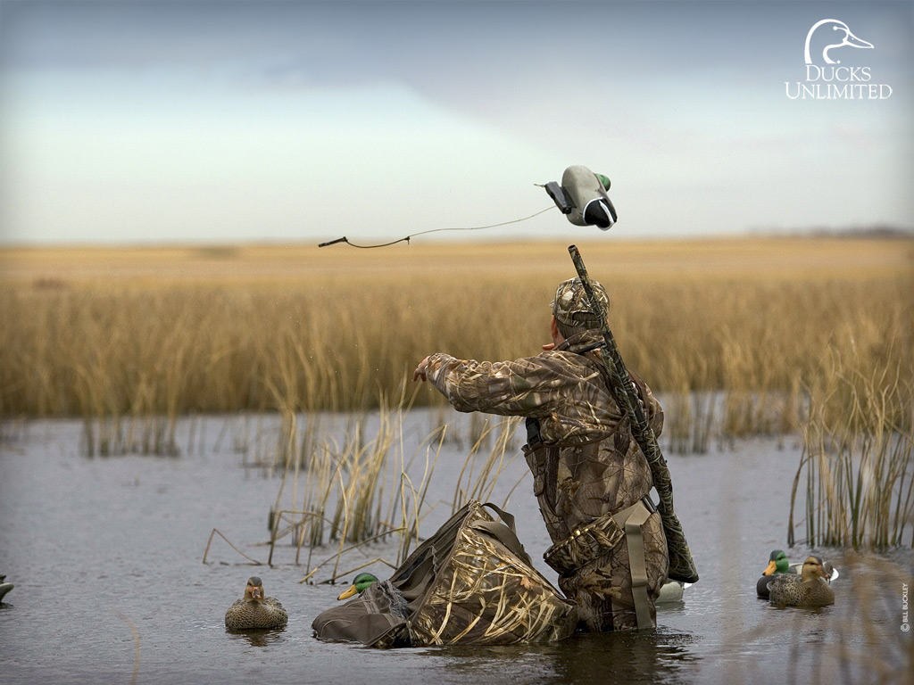 1000+ images about Duck hunting on Pinterest | Waterfowl hunting