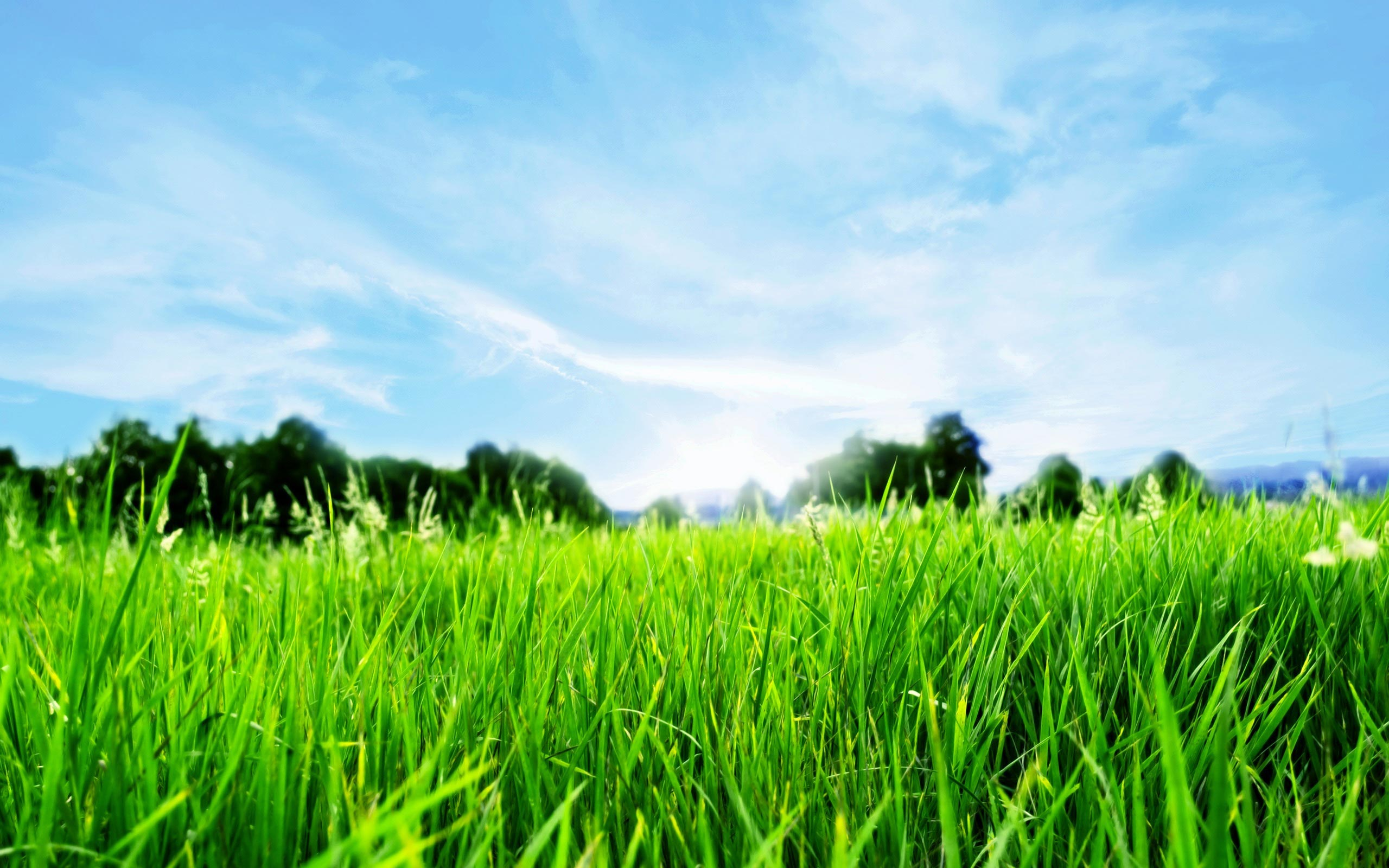 Collection of Grass And Sky Wallpaper on HDWallpapers