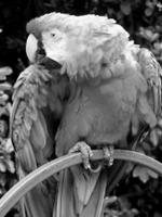 Grayscale - Wikipedia