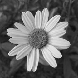 Grayscale Image, 30 PC Grayscale Photos in Popular Collection