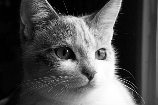 1000+ images about Grayscale on Pinterest   Scarlet, Physicist and