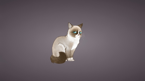 Grumpy Cat Cartoon Wallpaper Www Picswe Com