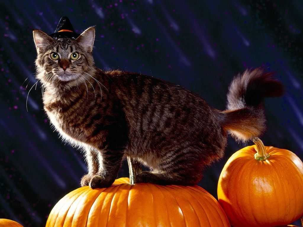 Halloween Cat Wallpapers - Wallpaper Cave