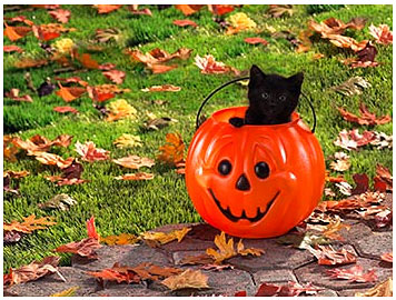 Free Desktop Wallpaper, Clip art for Halloween Cat Lovers