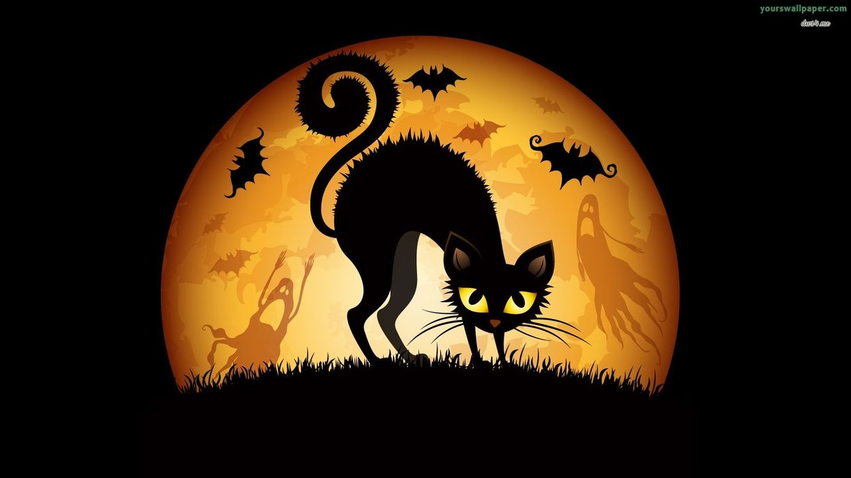 Halloween Black Cat Wallpapers - WallpaperPulse