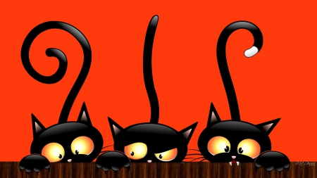 Collection of Black Cat Halloween Wallpaper on HDWallpapers