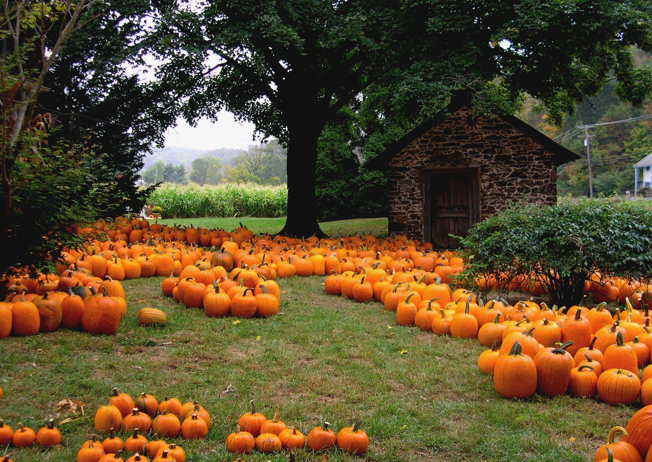 halloween fall wallpaper #16