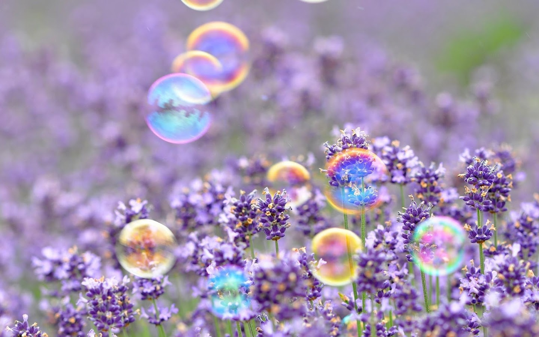 Soap Bubble Hd Wallpaper Mocihada