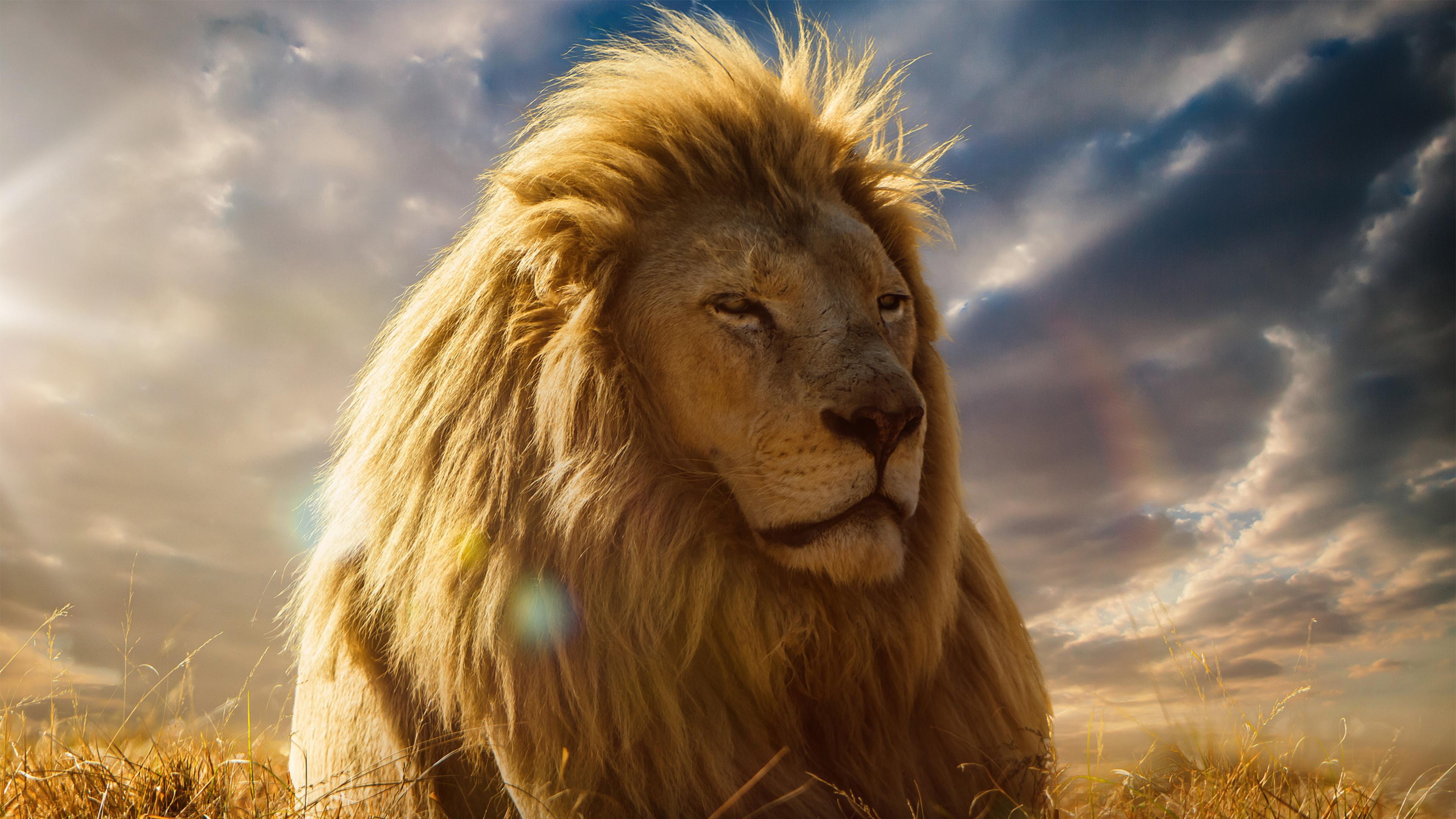 4K Ultra HD Lion Wallpapers HD, Desktop Backgrounds 3840x2160