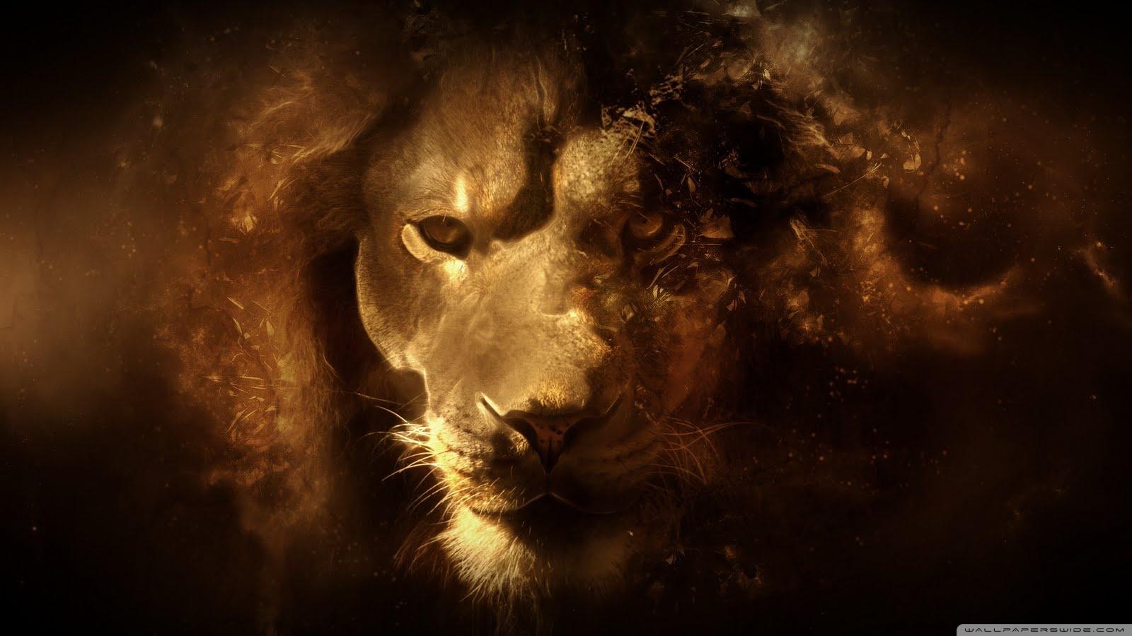 Lion hd wallpaper HD desktop wallpaper : Widescreen : High