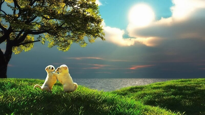 Cute Love Wallpaper Full HD | Download Desktop, Mobile Backgrounds