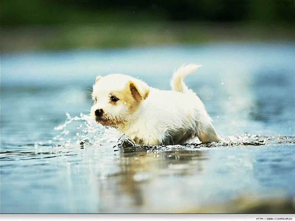 Puppy Wallpapers Free Group 83