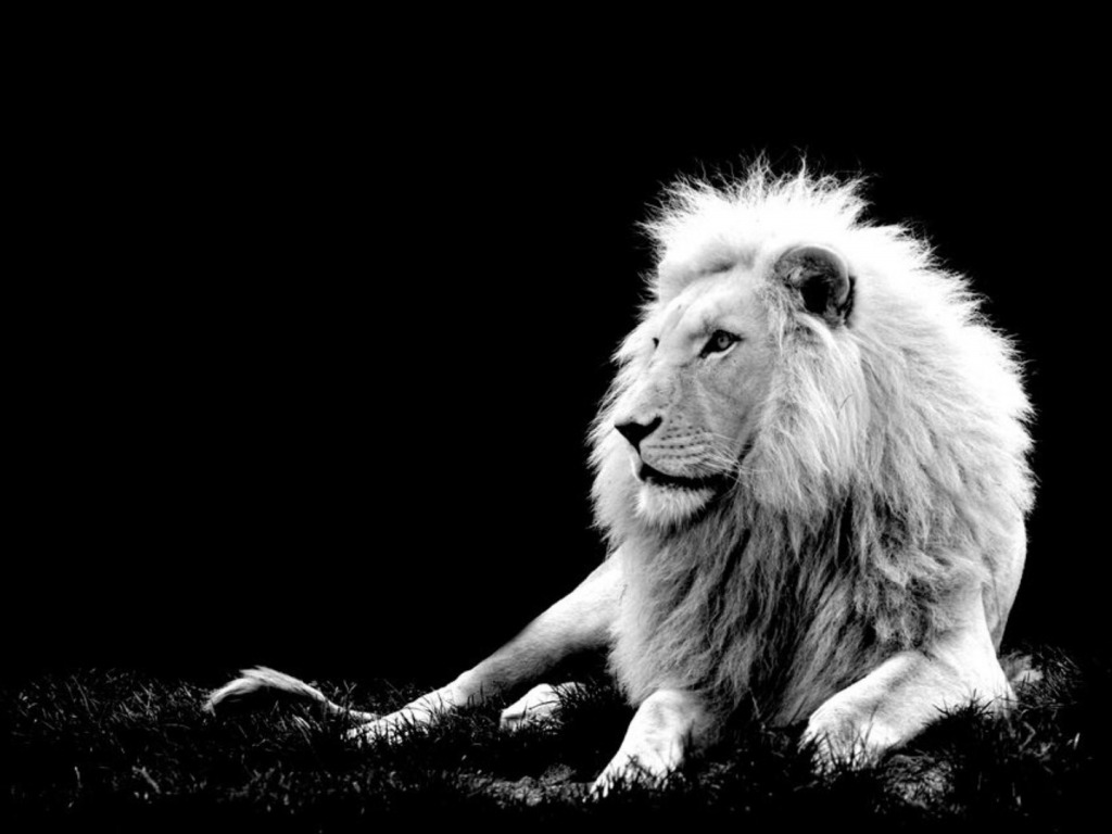 Most Powerful Lions In World | HD Wallpapers | Pictures | Images