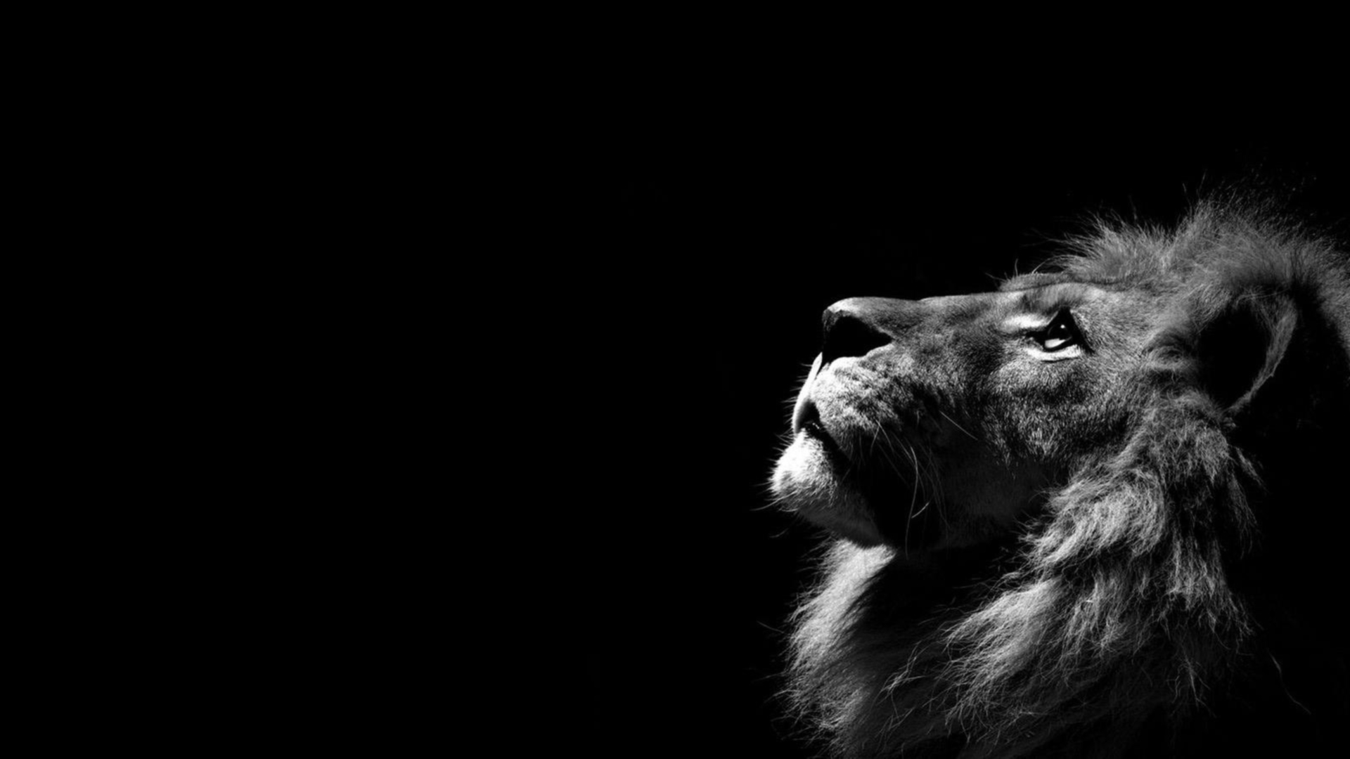 Nice HD Wallpaper's Collection (45) of Lion HD | Awesome Photos