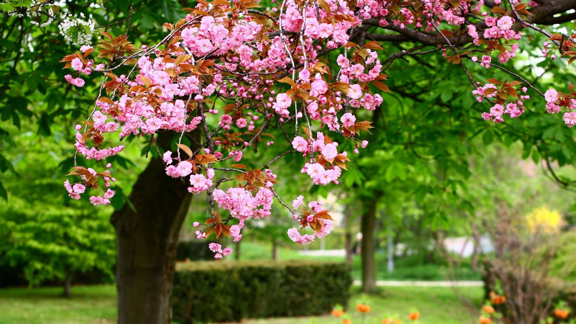Hd Wallpaper Spring